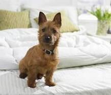 dogfriendlyhotel.info