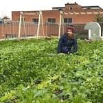 urbanagriculturalist.com